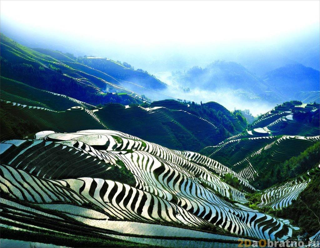 Рисовые поля в деревне Лунцзи уезда Луншэнь
